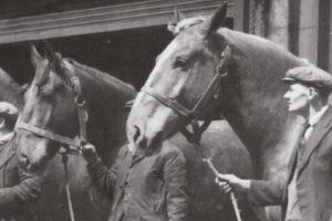 Bermondsey Council stables 1953