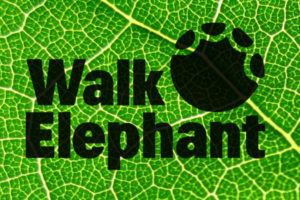 Walk Elephant logo