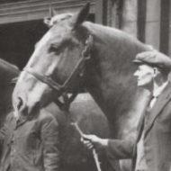 Horses: Bermondsey